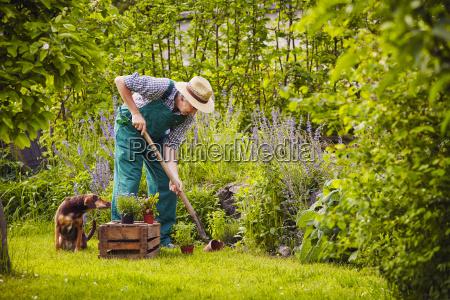 man dog gardening