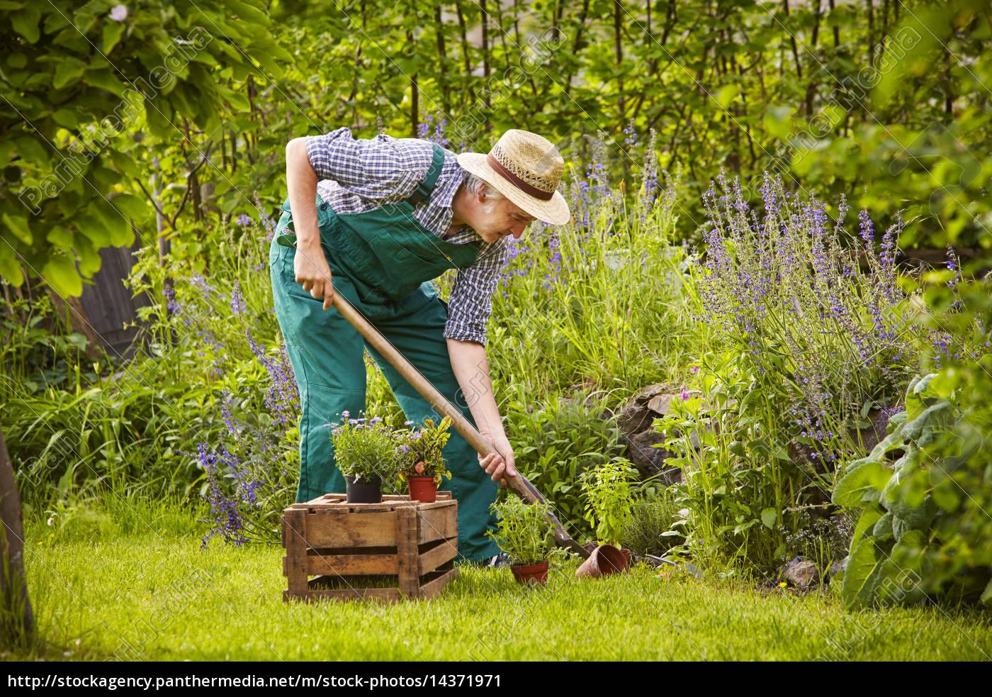 Prächtig Mann Garten Arbeiten - Stockfoto - #14371971 - Bildagentur #CW_66
