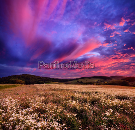 colourful sunrise over blossoming meadows