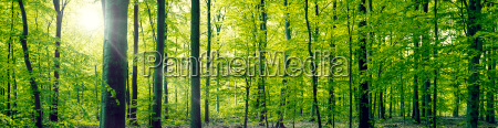 buchenwald panorama landschaft