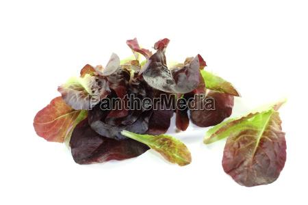 frischer knackiger roter salat