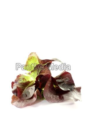 frischer leckerer roter salat