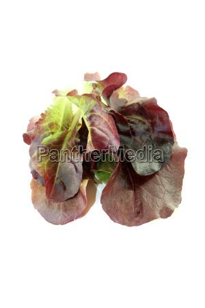 leckerer knackiger roter salat
