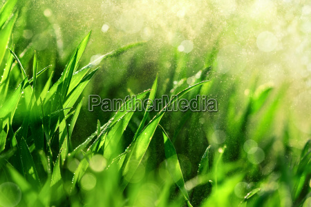 grass macro with water in the