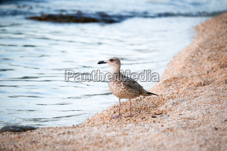 bird standing on shore