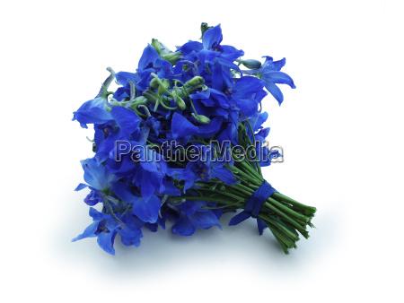 blumenstrauss blau