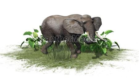 elefant auf weissem hintergrund