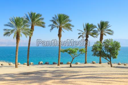 landschaft des toten meeres mit palmen