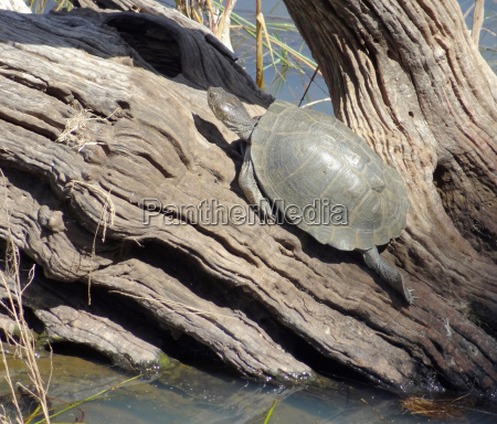 turtle in sunny ambiance