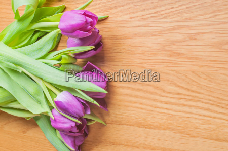 row of multicolored tulips for border