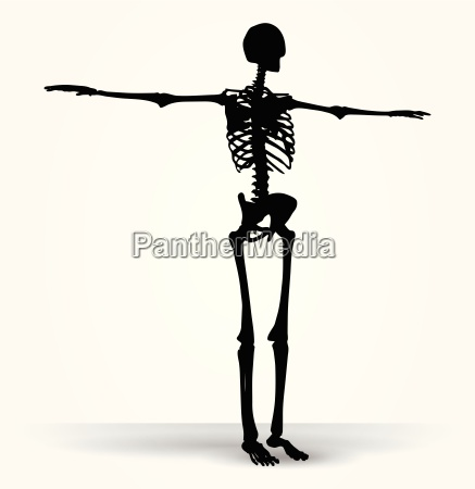 skelett silhouette in standard pose