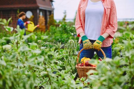 landwirt mit ernte