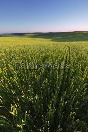 landwirtschaftliche feld