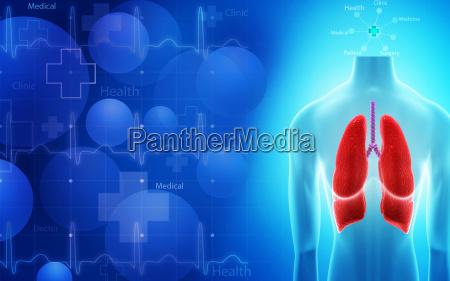 menschlichen lunge