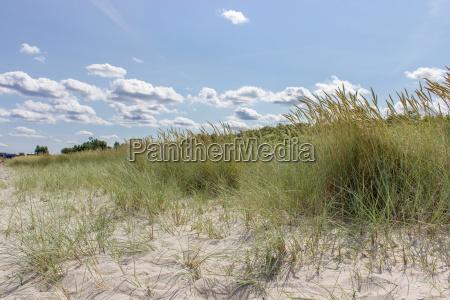 beach grass on the baltic beach