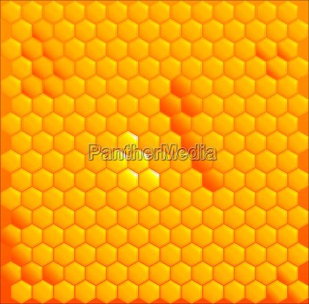 honig cells