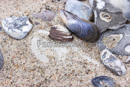 stones and shells in beach sand