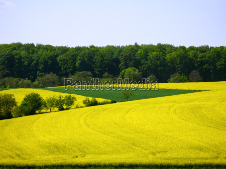landschaft im kraichgau