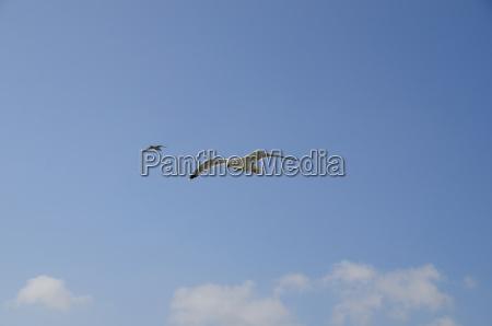 moeven und blauer himmel