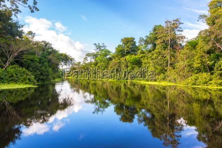 amazonian reflection
