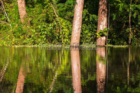 jungle reflection view