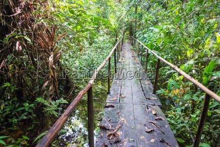 wooden jungle bridge
