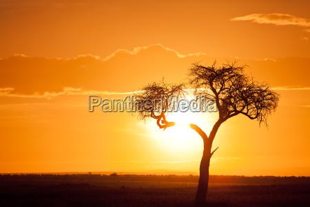 afrikanischer sonnenuntergang afrikanischer sonnenuntergang afrikanischer sonnenuntergang