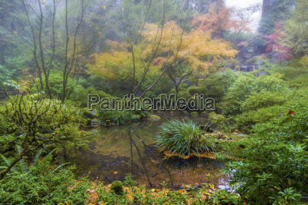 foggy morning at japanese garden