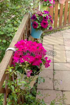 flower pots on fence with pink