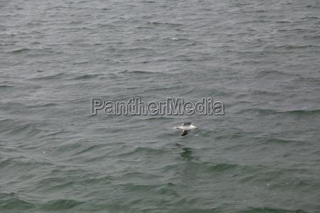 flight animal bird water north sea