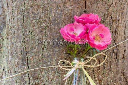 three pink rose petals in a