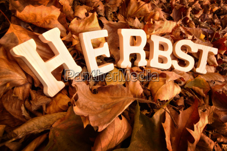 autumn lettering on dry leaves