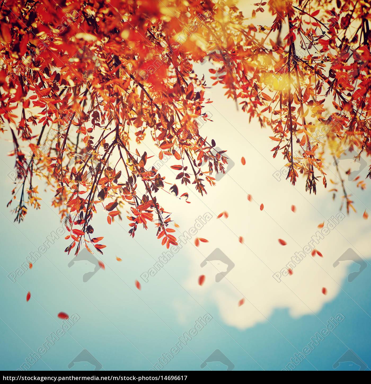 Schone Vintage Herbst Hintergrund Lizenzfreies Bild 14696617
