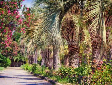 park blume blumen pflanze palmen gangway