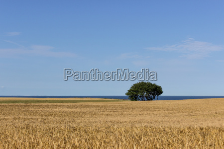 landscape with tree and field of