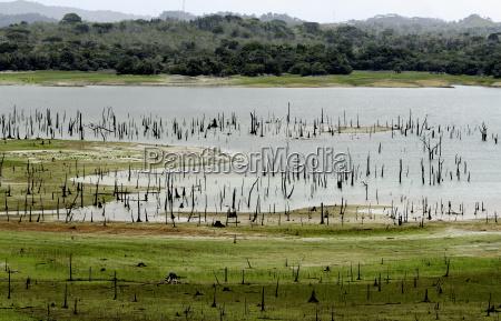 madden lake metropolitan natural park panama
