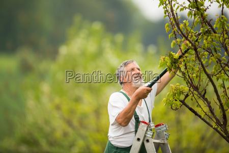 senior man gardening in his garden