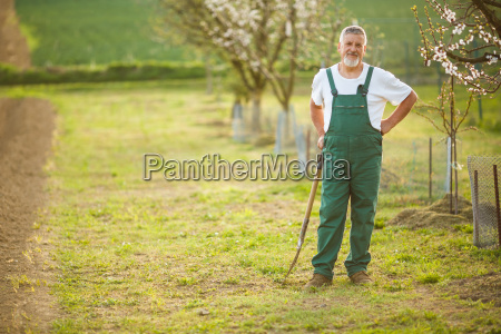 portrait of a handsome senior man