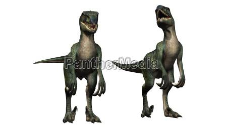 velociraptor dinosaurier isoliert auf weissem