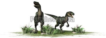 velociraptor dinosaurier isoliert auf