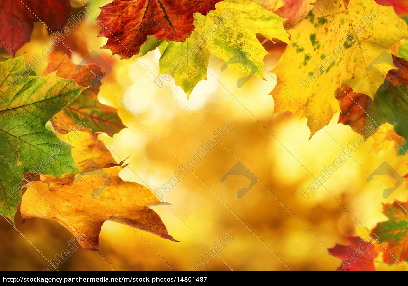 Autumn leaves framing a nice bokeh background - Stockfoto ...
