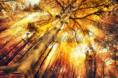 enchanting, forest, scenery, in, autumn - 14801477