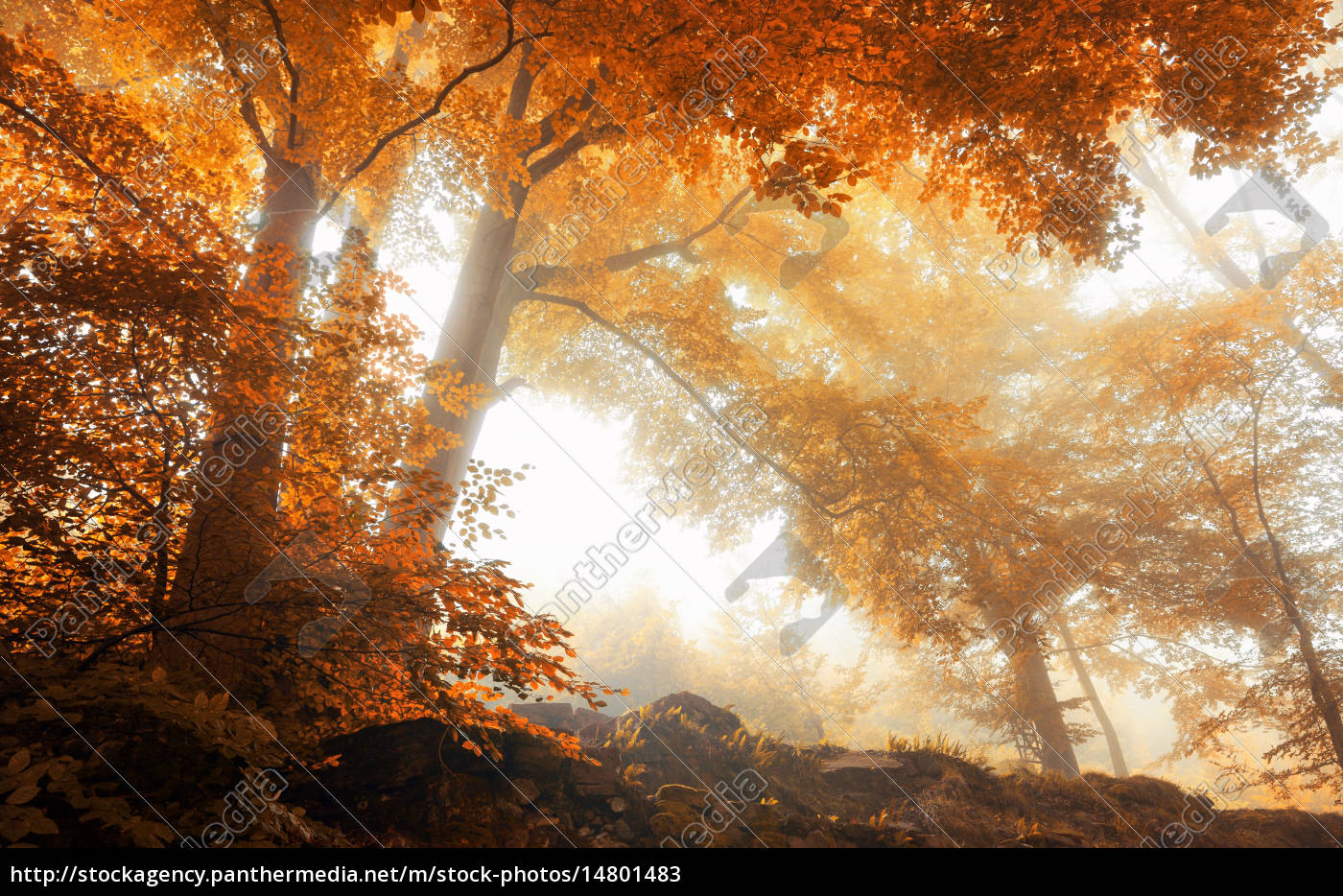 trees, in, a, scenic, misty, forest - 14801483