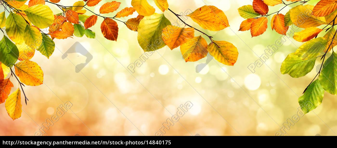 autumn, leaves, border, on, bokeh, background - 14840175
