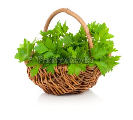 bunch of fresh parsley in a