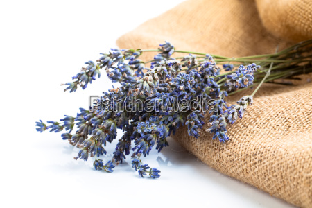 bunch of lavender flowers on a