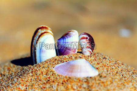 muscheln im sand am strand