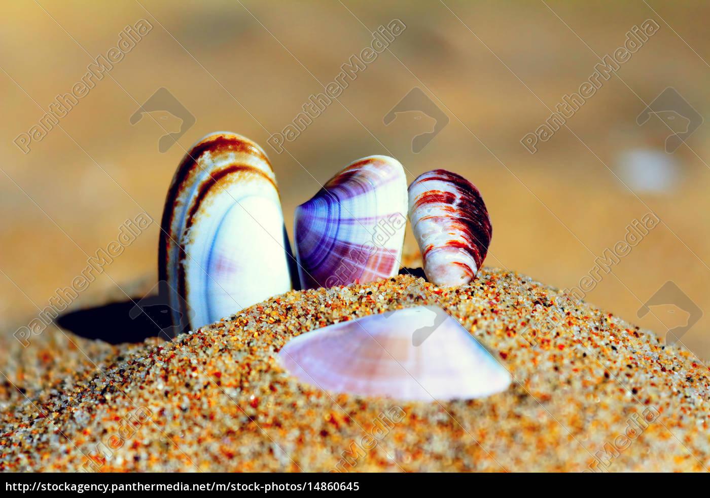 muscheln, im, sand, am, strand - 14860645