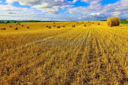 gelbe runde strohballen auf stubenfeld