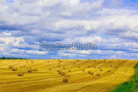 blu orizzonte agricoltura nuvola campo estate